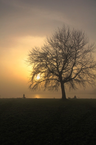 mist lake tree netherlands silhouette fog sunrise nevel meer fishermen earlymorning nederland boom uitgeest uitgeestermeer vissers zonsopkomst vroegeochtend mygearandme mygearandmepremium mygearandmebronze mygearandmesilver mygearandmegold