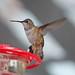 Oak Park Mystery Hummingbird
