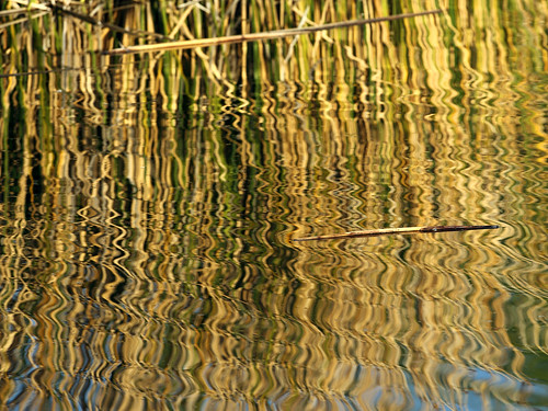 lake abstract reflection water composition golden warm bestviewedlarge stick zigzag goldenhour squiggles gilbertriparianpreserve riparianpreserve riparianpreserveatwaterranch