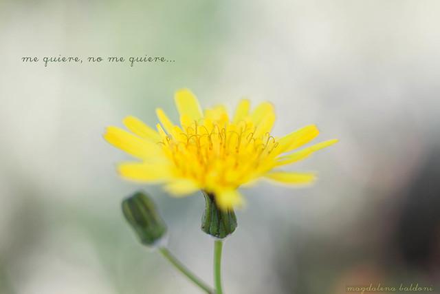 48/52 Una flor