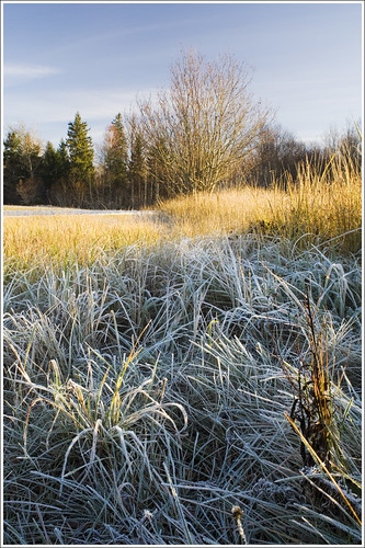 20111110. The frost. 9900. by Tiina Gill