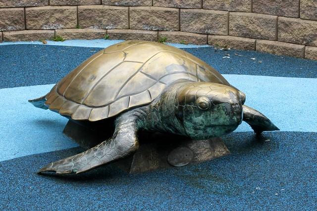 Sea Turtle At @TurtleBackZoo