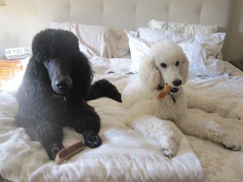 snacks in bed 001