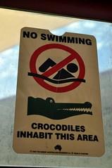 Aquí viu el Terry, un cocodril de 3 metres