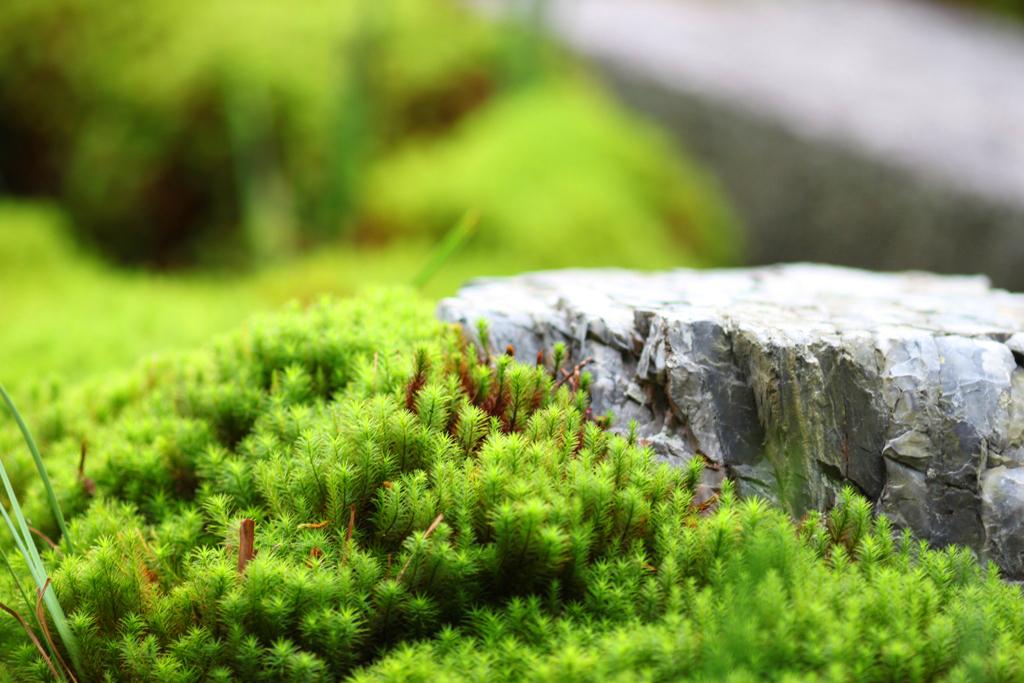Kyoto Rakunan Guide (7)