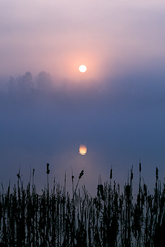 winter mist lake cold fog sunrise yorkshire