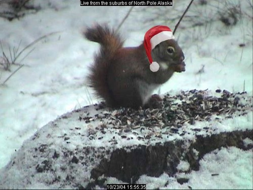 xmassquirrel.JPG by rgilcreasedatabrokers
