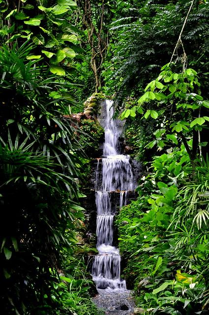mini jardim botanico:mini river