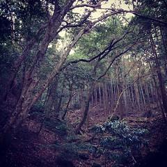 原始林(左)と人工林(右)の境目。