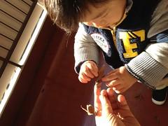 枯葉で遊ぶとらちゃん(2011/12/30)