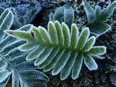 """Helada en """"El Caliente de Agüera"""" - The frost"""