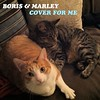 "Boris & Marley, ""Cover For Me"""