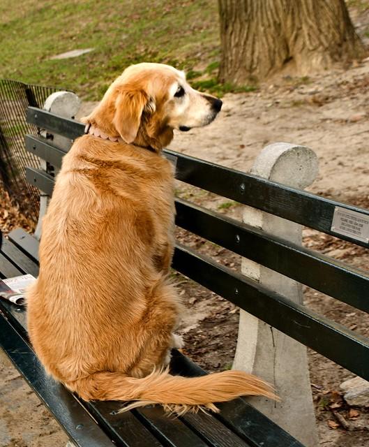 20120106-Setter contemplatingDSC_0615.jpg