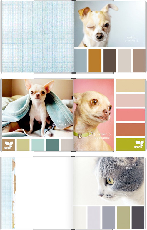 Creature Colors Book