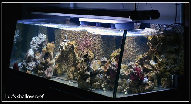 Luc's shallowreef tank 6713143693_8baa8122ac_z