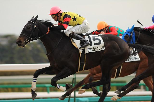 5R勝ち馬 クロスカップリング(蛯名正義)