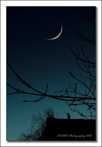 uk blue england moon bird rooftop photoshop evening twilight venus dusk branches yorkshire blackbird pontefract ef70210mmf3545usm ringexcellence dblringexcellence tplringexcellence nhbphotography eltringexcellence rememberthatmomentlevel1