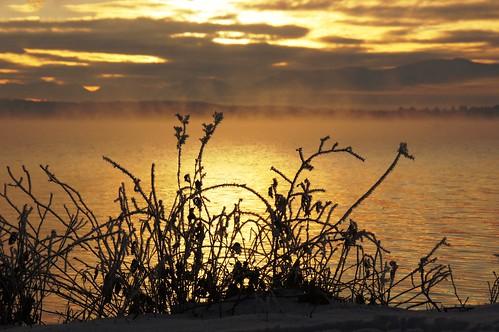 morning schnee winter light cloud mist mountain lake snow plant ice berg silhouette fog sunrise see licht frost nebel hoarfrost pflanze january wolke eis sonnenaufgang morgen januar starnbergersee 2012 dunst reif dorenawm