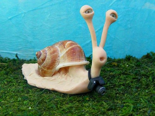 photographer snail