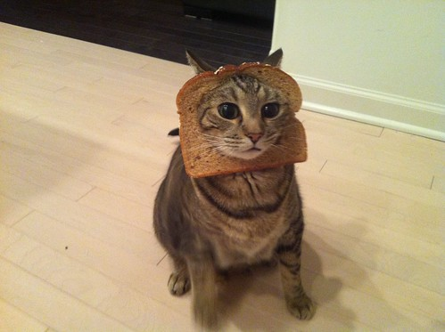 In-Bread Cat 3