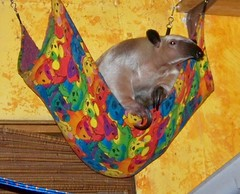 Pua in the little hammock