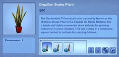 Brazillian Snake Plant