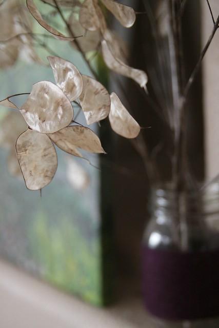 lunaria, money plant