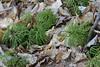 Easter 2014 - Birch Bluff Trail - Ground Cover Catkins