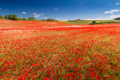flowers light red sky france nature fleurs french landscape spring view pov poppies paysage alpesdehauteprovence southfrance coquelicots lavandes valensole photoshopcs3 1018mm canon70d benjaminmourot lightroom5