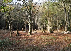 clanger wood