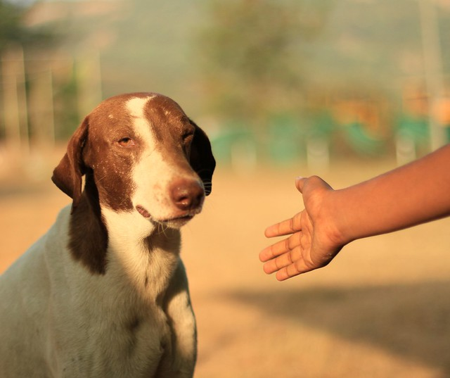 Dog and Hand