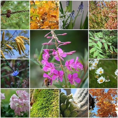 2011 Flora & Fauna