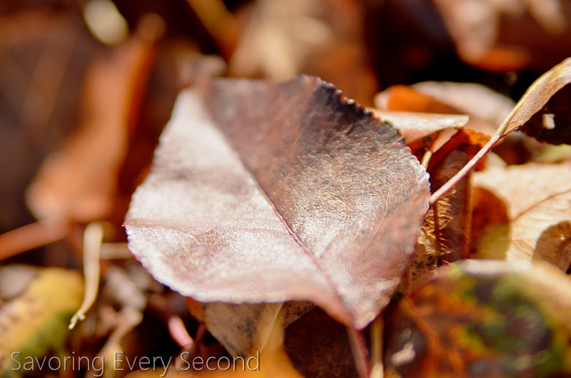 Fall Leaves7-Edit.jpg