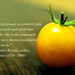 tomatoquote by Oceanic Wilderness