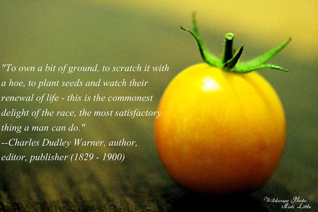 tomatoquote