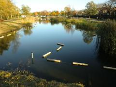 水元公園20111205-057