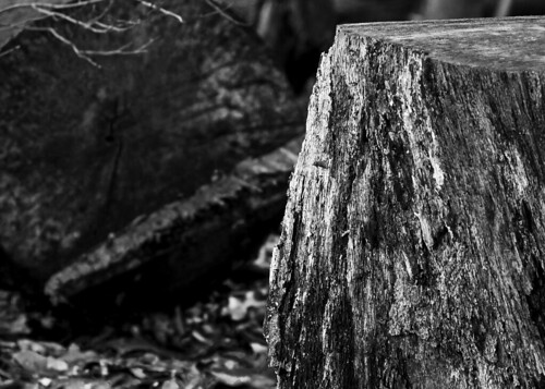 Black and White Stump