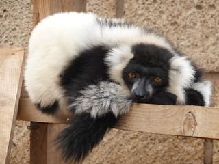 Bild av Monkey Park. tenerife monkeypark 2011
