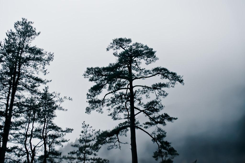 是福壽山不是萬壽山唷
