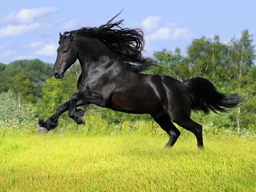 無料写真素材|動物|馬・ウマ