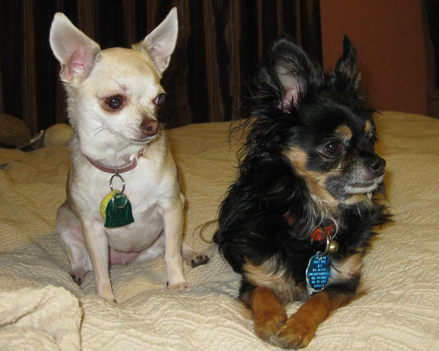 Itzl and Xoco on a Visit