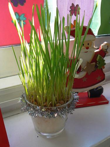 blé 1.jpg