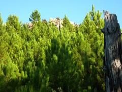Punta Radichella par la sente de chasseurs : sommet de Punta Radichella pris à la fin de la montée