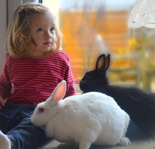 """Mein Kleinkind war etwas irritiert von den stupsenden und schnüffelnden Hasen. """"Sowas gibt es auch in echt und nicht nur in Büchern!?"""