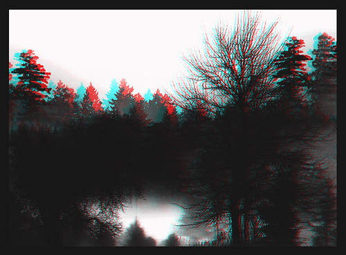 Forest Anaglyph 02
