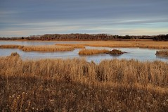Beaver Lodge DSC_3945 by Mully410 * Images
