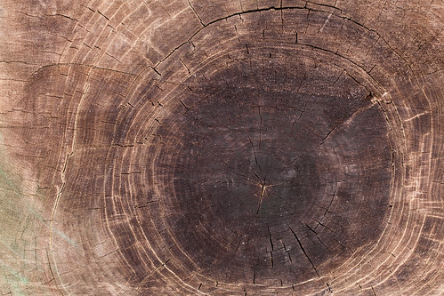 999/1000 - Tree Rings by Mark Carline