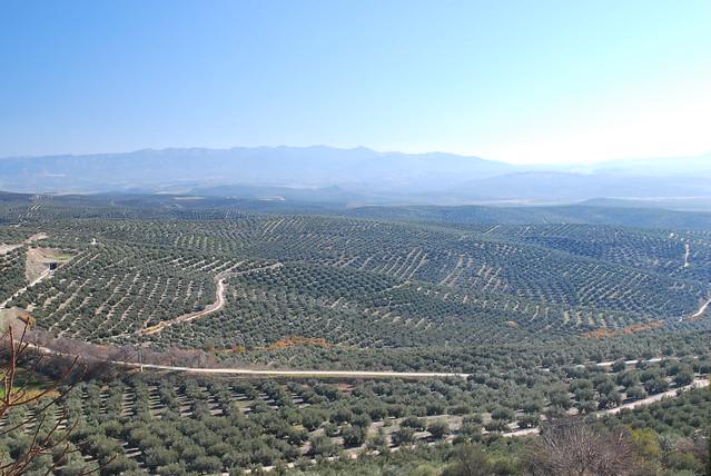 Andalusia dicembre 2011 575