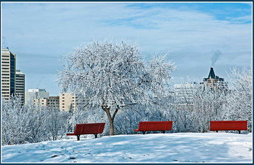 winter snow canada colour contrast frost saskatchewan