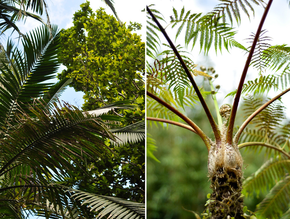 Ferns-and-coconuts